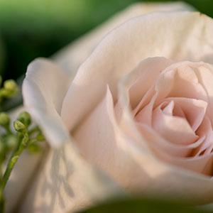 Blomster Kunsten